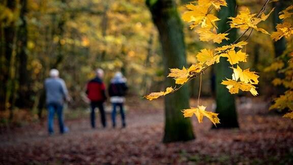 Menschen wandern in einem herbstlichen Wald