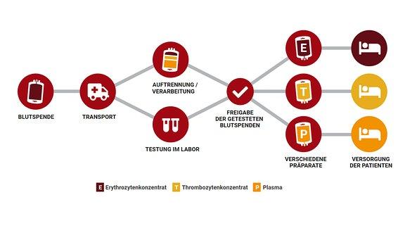 Grafische Darstellung über Wege einer Blutspende