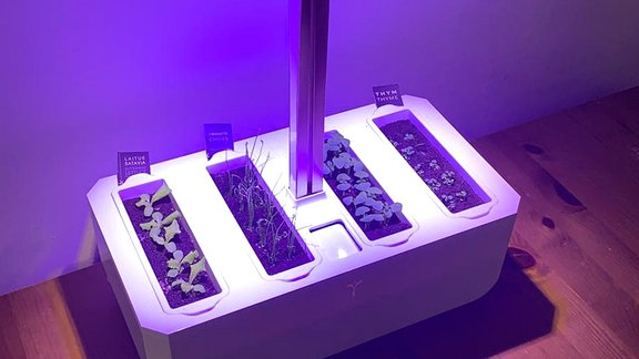 Smartes Mini-Gewächshaus