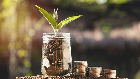 Kleingeld in einem Glas, darauf wächst eine Pflanze.