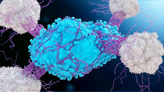 Illustration zeigt Krebszelle, die von weißen Blutkörperchen attackiert wird.