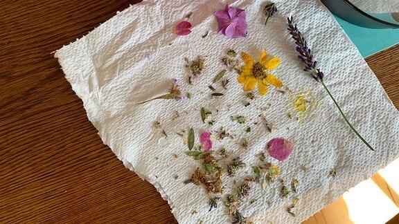 lose Blüten auf einem Papiertuch