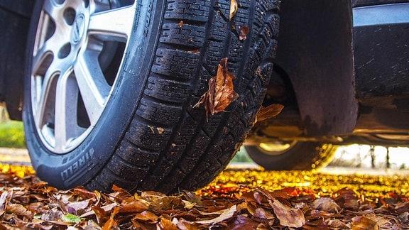 PKW fährt auf Herbstlaub