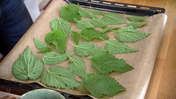 Brennnessel-Blätter vor dem Backen