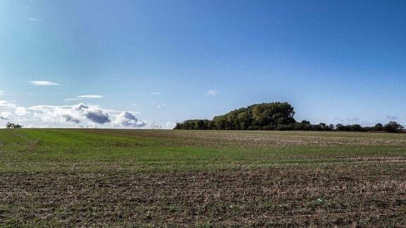 """""""Judenbusch"""": Der alte Jüdische Friedhof von Güsten überwuchert vom Wald."""