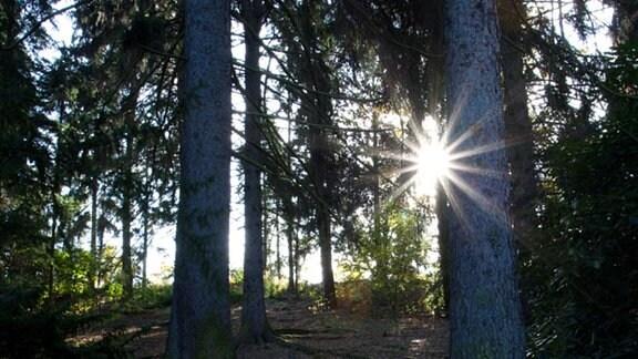 Ein Waldstück mit Sonne.