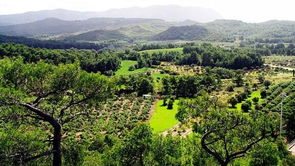 Landschaft mit Wald auf Rhodos