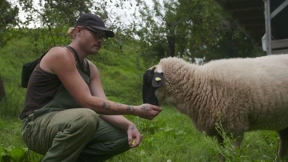 Ein Mann füttert ein Schaf.