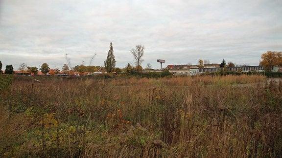 So sieht der Sportplatz in der Eutritzscher Straße heute aus, die letzten Gebäude wurden 2016 abgerissen. Das verwilderte Gelände befindet sich in Privatbesitz.