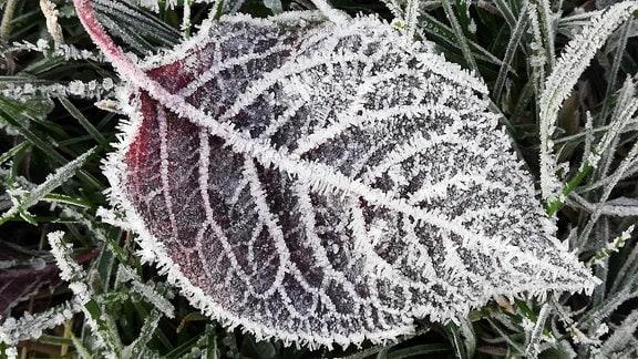 Nahaufnahme eines gefrorenen Blatts