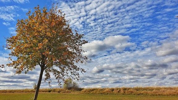 Herbstbäumchen vor einem blauen Himmel mit ein paar kleinen Wolken