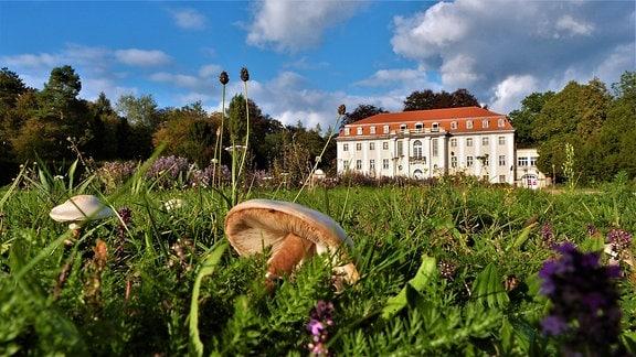 Wiese mit Pilzen vor Schloss Tangerhütte