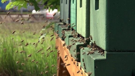 Bienen sammeln sich an Bienenstöcken