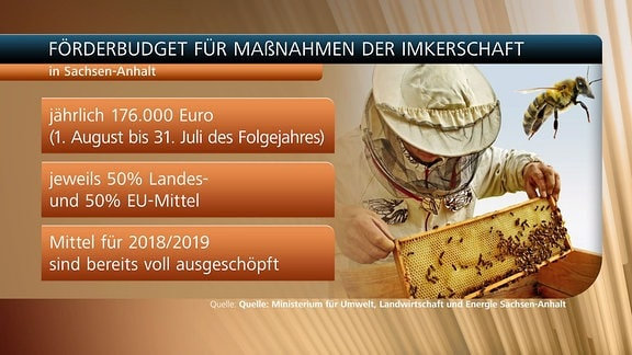 Eine Grafik, die das Förderbudget für Maßnahmen der Imkerschaft zeigt
