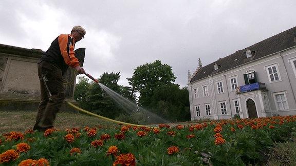 Mitarbeiterin gießt den Rasen im Wörlitzer Gartenreich