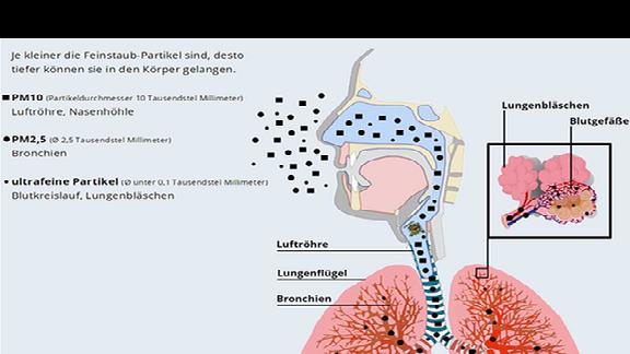 Die Wirkung von Feinstaub-Partikeln im Körper