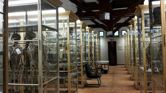 Ein Raum mit Vitrinen voller anatomischer Präparate