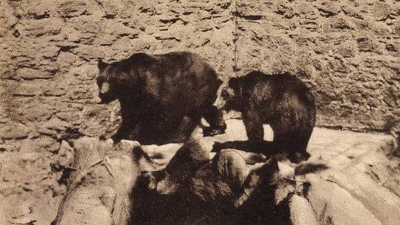 Die Bären auf Schloss Droyßig