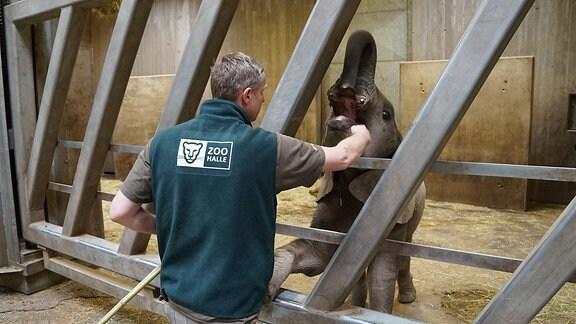 Elefant Ayo wird von seinem Pfleger trainiert