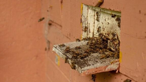 Bienen an ihrem Stock