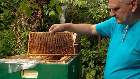 Imker Andreas Gasch mit Bienen