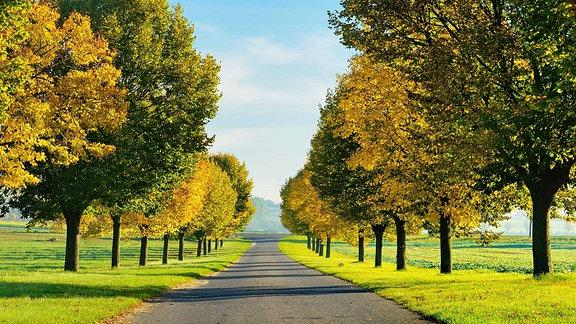 Lindenallee in voller Herbstfärbung im Burgenlandkreis.