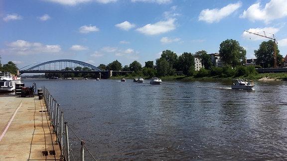 Mehrere Skipperboote schwimmen hintereinander auf der Elbe in Magdeburg