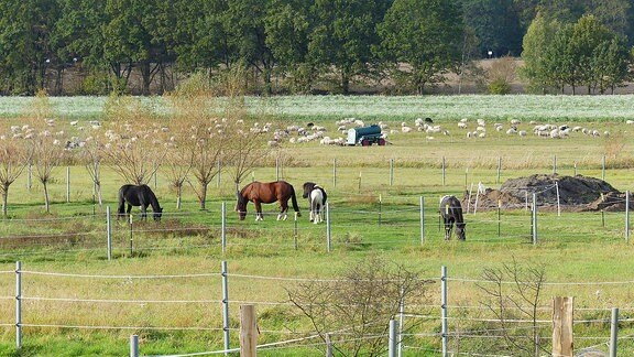 Eine Koppel mit Pferden bei Dolle.