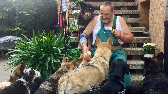 Mann sitzt auf Treppe und Füttert Hunde