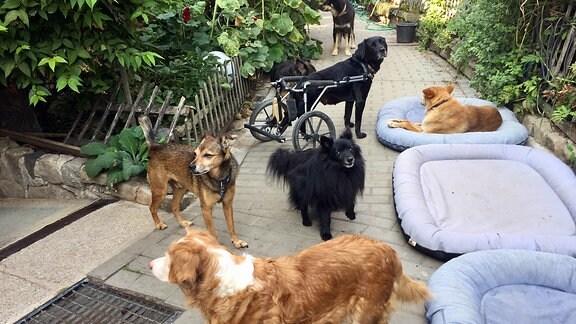 Hunde auf einem grünen Hof