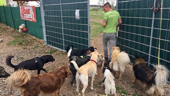 Verschiedene Hunde folgen Mann durch Tor.