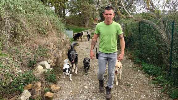 Mann läuft durchs Freie einen Weg entlang, Hunde folgen ihm