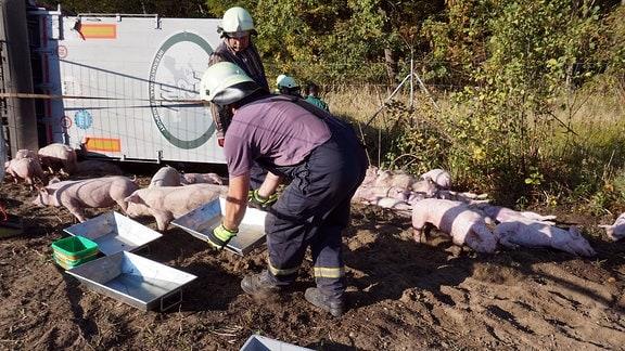 Ein Feuerwehrmann stellt Schweinen Wasser hin