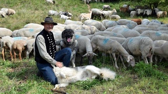 Ein Schäfer mit seiner Herde und zwei Hütehunden auf einer Wiese