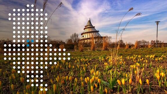 Blick auf den Jahrtausendturm in Magdeburg, davor Blumen im Elbauenpark, darauf eine Sachsen-Anhalt-Karte mit Punkten