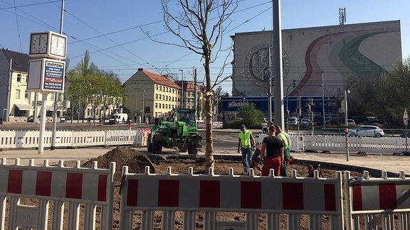Schnurbaum Magdeburg