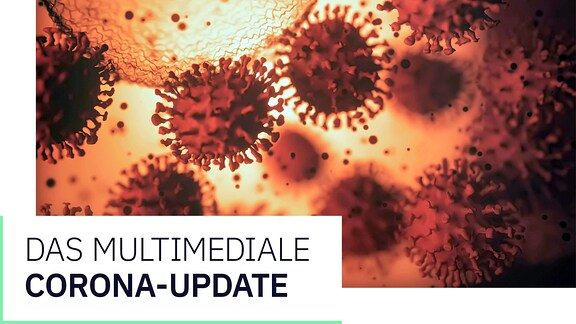 Grafik: Der Corona-Daten-Update Newsletter