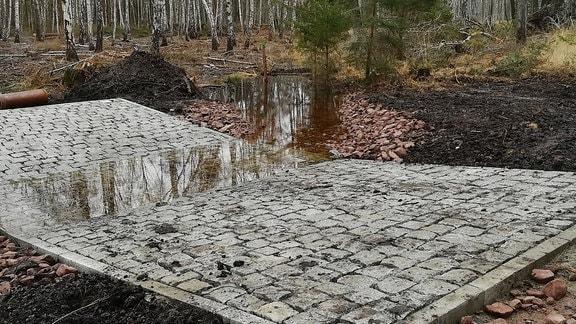 Gepflasterter Weg inmitten eines Wasserlaufs in Birkenwald