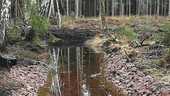 Künstlich angelegter Wasserlauf in Wald