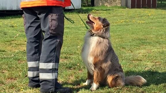 Mann erteilt Hund, der vor ihm sitzt, Kommandos