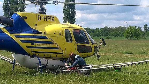 Zwei Leute arbeiten an Sprühvorrichtung von Helikopter, der auf einer Wiese steht