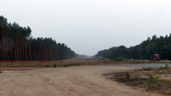 Wald-Schneise neben der B189 auf dem Abschnitt Colbitz-Dolle