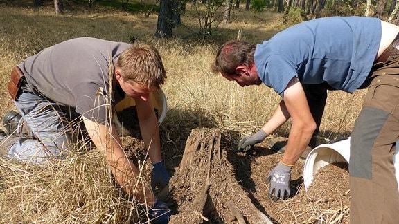 Zwei Männern graben mit ihren Händen in einem Ameisenhaufen.
