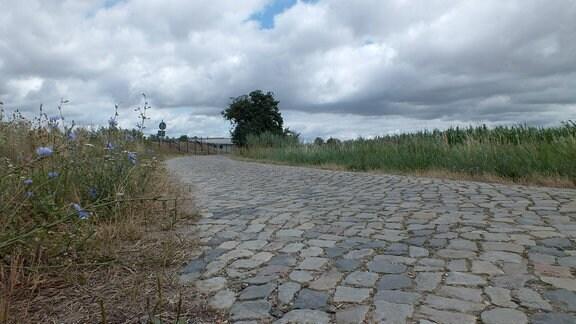 Eine Straße mit Kopfsteinpflaster, umgeben von Wiesen.