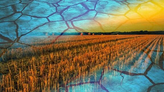 Collage: Ein abgeerntetes Getreidefeld in der Abendsonne bei Bennstedt im Saalekreis und ausgetrockneter Boden
