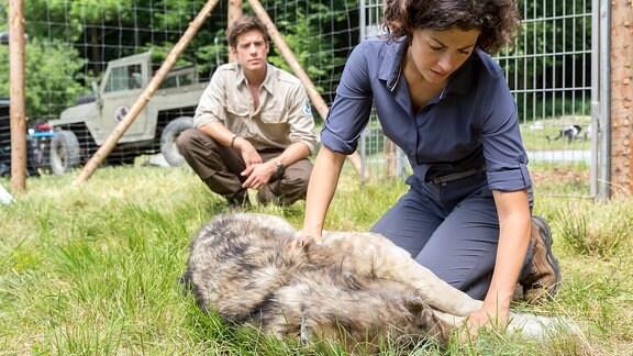 Die Biologin Emilia versorgt eine verletze Wölfin, die sie unterhalb des Affensteins im Nationalpark Sächsische Schweiz gefunden hat