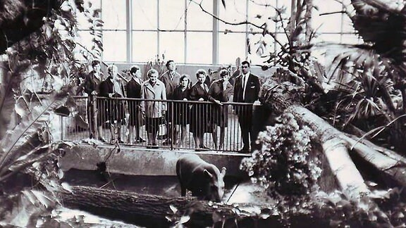 Die Aufnahme von 1968 zeigt Besucher im Tropenhaus des Zoos Hoyerswerda vor einem Gehege
