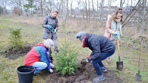 Eine Familie beim Pflanzen eines Bäumchen.