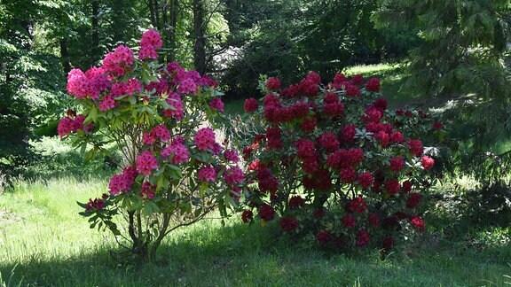 Der Kromlauer Park blüht