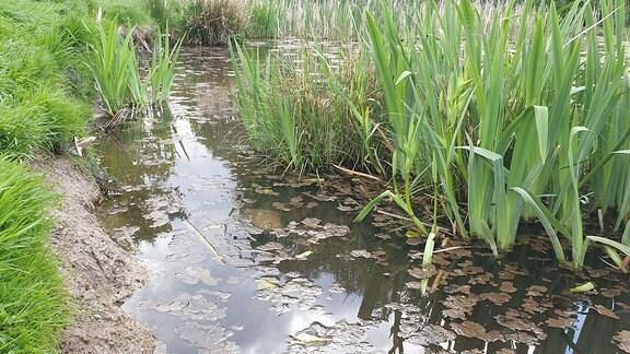 Ufer eines Fischteiches - Wasser fehlt
